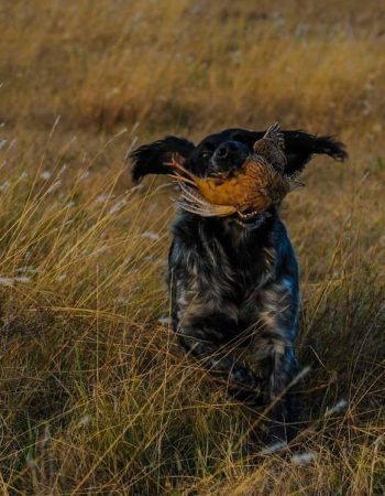 River Plate Wingshooting – All-inclusive Wing-Shooting Lodges in Uruguay and Argentina for Mixed-bag Duck, Dove, Pigeon and Giant Perdiz Hunts