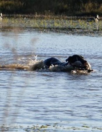 River Plate Wingshooting – Mixed-bag Duck, Dove, Pigeon and Giant Perdiz Shooting