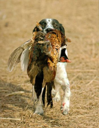 The Ringneck Ranch – Upland Bird Hunting Lodge in Kansas for Pheasant, Quail and Grouse with Dogs
