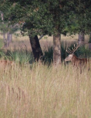 Fox Brown Safaris – Dangerous Game, Big Game Outfitters and Upland Bird Hunting in Florida