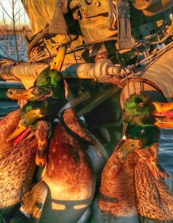 Blackland Outfitters – Texas Waterfowl Hunting Guide Service