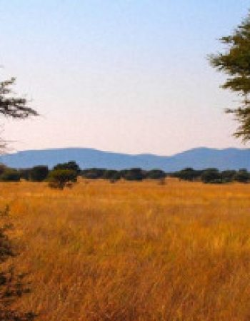 Hunters Namibia Safaris – The Best Free-Range, Fair Chase Hunting Outfitters in Namibia