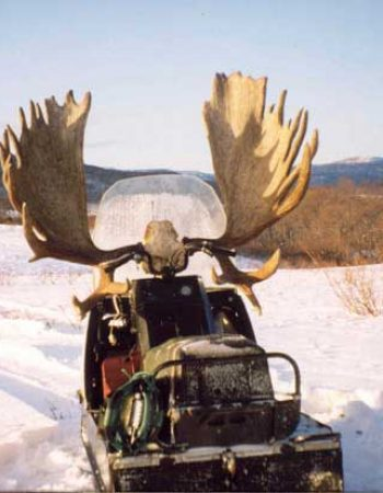 Kamchatka Outfitters – Russian Brown Bear, Wolf, Moose and Snow Sheep Trophy Hunts on the Kamchatka Peninsula.