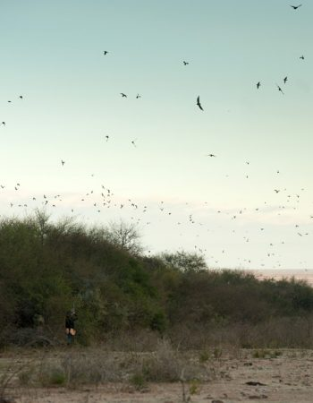 El Monte Wing-Shooting Lodge – All-Inclusive High-Volume Hunting for Dove, Pigeon and Giant Perdiz between in Uruguay