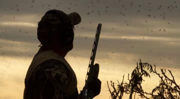 Executive Outfitters – The Best Dove Hunting Guides in Central Texas for Dove Hunts in Brown, Coleman & Callahan County.