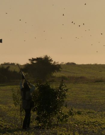 Algar Safaris – Fair-Chase Free-Range Big Game Hunting and Wingshooting, since 1991
