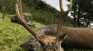 Irish Deer Hunting Outfitters – Sika Stag and Pigeon Hunts in Kerry and West Cork Counties near Kenmare in 2021 2022 2023