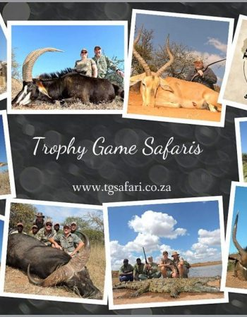 South Africa Hunting – Fair Chase Hunting Safaris for Plains Game, Big Game and Dangerous Game with Outfitters in Limpopo in 2022 2023