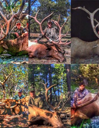 Let 'er Rip Outfitters – Arizona Hunting Guides for Mule Deer, Coues Deer, Pronghorn, Elk, Black Bear and Cougar