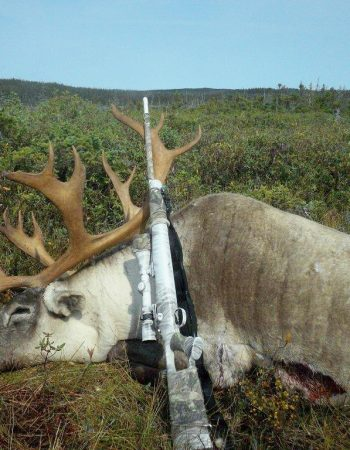 Spruce Pond Hunting – Newfoundland Hunting Outfitters for Moose, Black Bear and Woodland Caribou