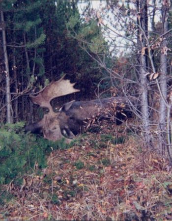 Birch Mountain Outfitters – Alberta Hunting Outfitters for Wood Bison, Black Bear, Moose and Grey Timber Wolf