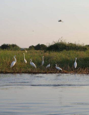 Dusty Foot Tours – Namibia Fresh Water Sport Fishing Charter Guide and Safari Outfitter