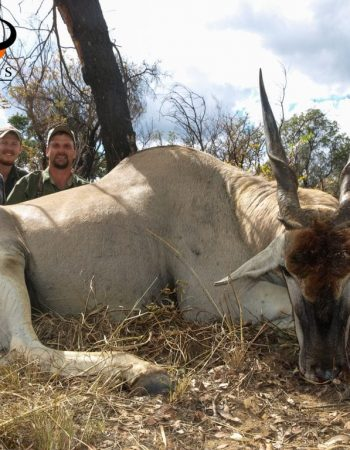 TDK Safari Outfitters – South Africa Dangerous Game Hunting Safaris on Private Ranch Land in Limpopo