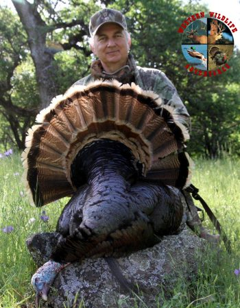 California Hunting Outfitters – Affordable Hunting Trips in California for Blacktail Deer, Tule Elk, Turkey and Waterfowl