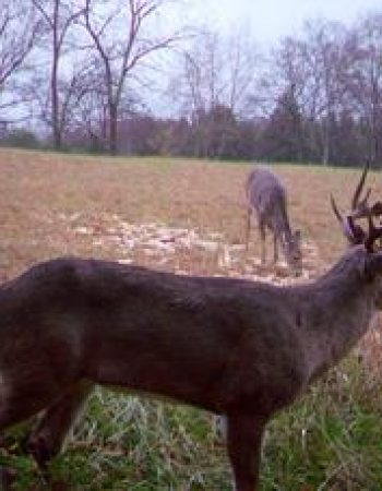 Kentucky Whitetail Outfitters – Affordable DIY Trophy Whitetail Deer Hunting Preserve near Louisville and Bowling Green Kentucky