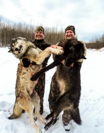 Alberta Hunting Outfitters – Hunting Trips for Whitetail Deer, Timber Wolf, Moose and Elk in Alberta, Canada