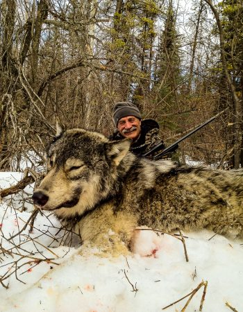 Alberta Hunting Outfitters – Hunting Trips for Whitetail Deer, Timber Wolf, Moose and Elk in Alberta, Canada 2021 2022 2023