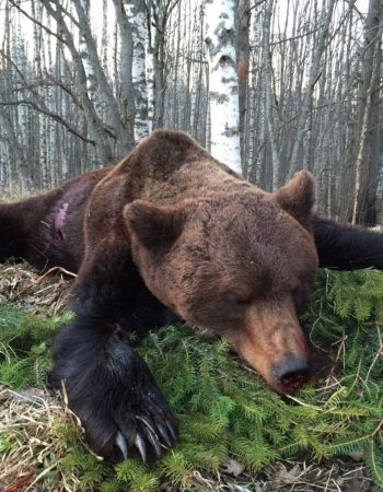 Croatia Hunting Outfitters – Hunting for Brown Bear, Balkan Chamois, Red Deer, Fallow Deer, Roe Buck and Mouflon Rams