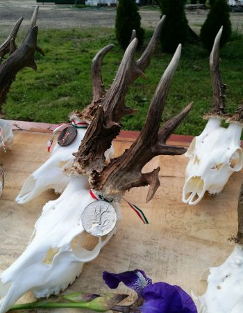 Hungary Hunting Outfitters – All-Inclusive Luxury Hunting Lodge in Hungary for Red Stag, Fallow, Mouflon, Roebuck and Boar
