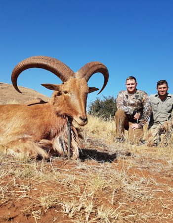 South Africa Hunting Trips – Affordable Plains Game Safaris on Private Hunting Farm in Northern Cape Province 2022 2023
