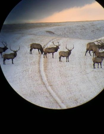 Montana Hunting Outfitters – Montana Horseback Hunting Trips for Free Range Elk on Private Ranch Land