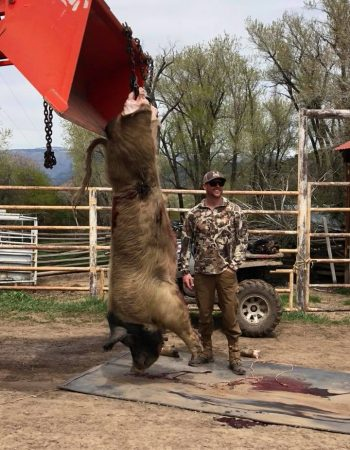 "Colorado Hog Hunting – Guaranteed, Affordable High Fence ""Hogzilla"" Wild Boar Hunting Outfitters"