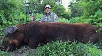 """Colorado Hog Hunting – Guaranteed, Affordable High Fence """"Hogzilla"""" Wild Boar Hunting Outfitters"""