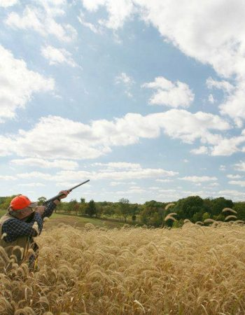 Harpole's Heartland Lodge – Orvis-Endorsed Wingshooting Lodge for Pheasant, Quail Upland Bird Hunting in Illinois