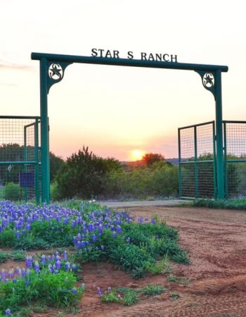 Star S Texas Hunting Ranch – Hunt Trophy Whitetail, African Game and Exotics on a High Fence Hunting Ranch in Texas Hill Country