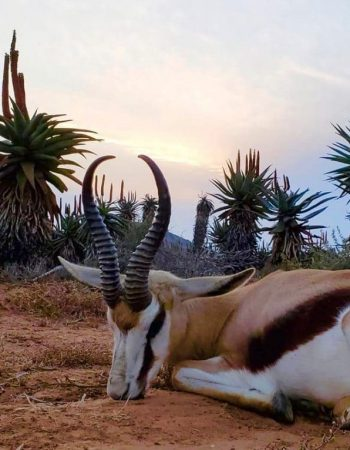 Royal Karoo Hunting Safaris – South Africa Fair Chase Luxury Hunting Lodge for Dangerous Game, Plains Game and Wing-Shooting Safaris