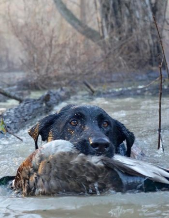 Blazn Guns Hunting Outfitter – Arkansas Flooded Timber Waterfowl Hunting Trips for Wood Ducks, Mallards and Geese