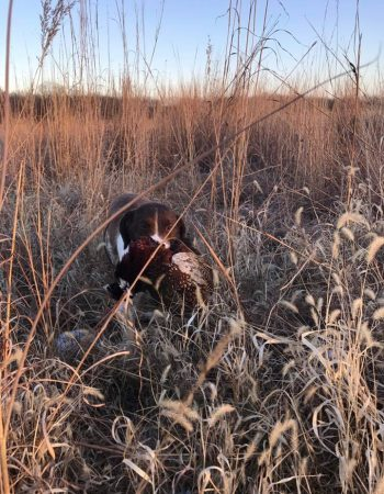 Heggemeier Game Farm – Missouri Hunting Lodge and Outfitters for Pheasant, Quail, Turkey, Duck, Goose, Dove and Whitetail Deer