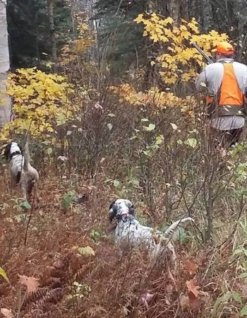 West Hill Hunting Outfitters – New Hampshire Hunting Lodge for Partridge, Quail, Grouse, Pheasant and Woodcock Shooting Trips