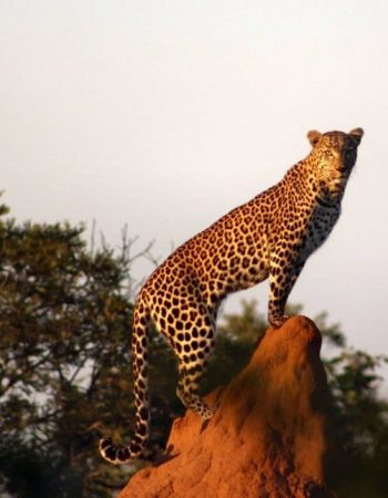 Likhulu Hunting Safaris – South Africa and Mozambique for the Big 5, Dangerous 7 and Plains Game Trophy Hunts 2022 2023