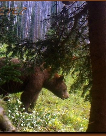 Utah Big Game Hunting Outfitters – Fully Guided Trophy Elk, Mule Deer, Black Bear and Cougar Hunting Trips