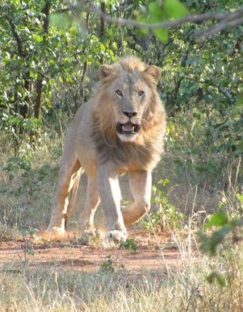 Brent Hein Africa Hunting Safaris – Big Five and Dangerous Game Hunting Trips in Zimbabwe and South Africa