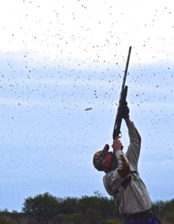 No-Limit Bird Hunting Lodge – Argentina Unlimited High-Volume Dove and Pigeon Wingshooting Trips for Corporate Hunting Retreats