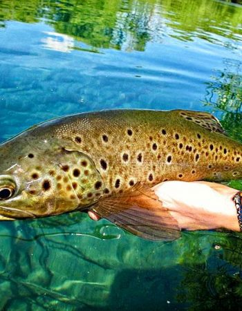 Patagonia Luxury Fly-Fishing Trips – Argentina Golden Dorado, Rainbow, and Brook Trout Fishing Outfitters 2021 2022