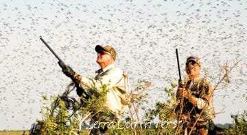 Argentina Corporate Hunting Lodge – South America Hunting and Wingshooting Trips for Large Groups, Small Groups and Corporate Retreats