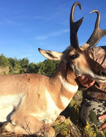 Love of the Hunt Outfitters-Fully Guided Big Game Hunting in New Mexico for Deer, Elk, Sheep, Oryx, and Antelope