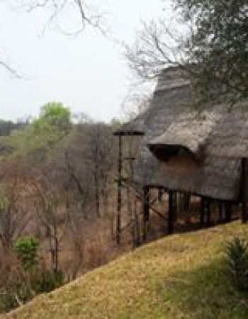 Leadwood African Adventures – Luxury Hunting Safaris in Limpopo South Africa