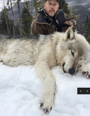 Montana Hunting and Fishing Trips – Hunting Outfitters for Elk, Whitetail, Mule Deer, Moose, Bighorn Sheep, Mountain Goat, Black Bear, Cougar and Wolf