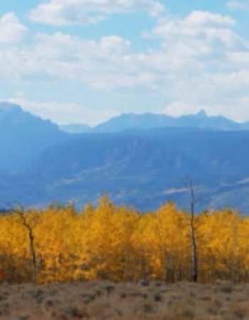 Colorado Elk Hunting Ranch – Guaranteed High-Fence Trophy Elk Hunts In Western Colorado Mountains