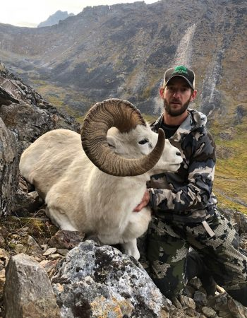 Mountain Monarchs of Alaska – Spring and Fall Brown Bear, Arctic Grizzly, Dall Sheep, Caribou, and Moose Fully-Guided Hunts