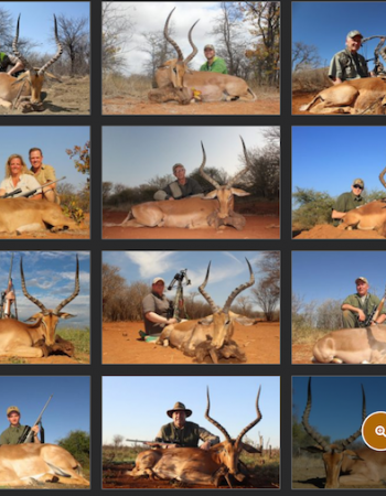 Motsomi Hunting Safaris – South Africa Plains Game Bow-Hunting and Dangerous Game Rifle Hunting Safaris