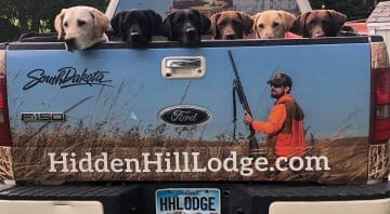 Hidden Hill Lodge –The Best Pheasant Hunting Outfitters in South Dakota