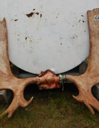 Stoney River Lodge – Alaska Hunting Outfitters for Guided Grizzly Brown Bear Hunts, Caribou Hunts and Black Bear Hunts